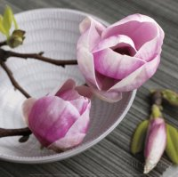 Magnolia on a Bowl
