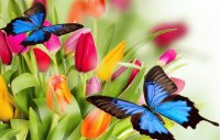 Tulips with Butterfly 's
