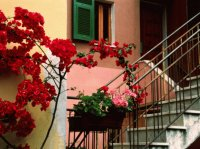 Flowers and painting House Italy