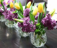 Purple Lilacs and Yellow Tulips