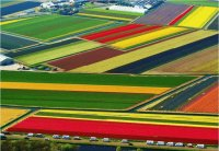 Tulip fields near Amsterdam Schiphol int. airport