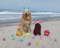 Dogs Celebrate Easter on the Beach-San Diego