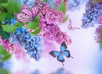 Lilac and Butterflies