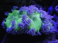 Coral from Great Barrier Reef