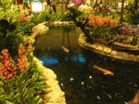Singaport Airport Fishes