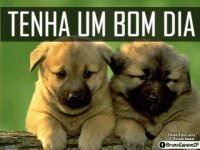 - 3- cachorrinho