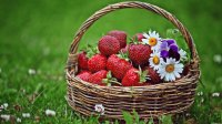 Basket with Strawberry 's