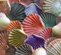 Colored Shells