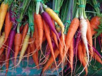 Colored Carrots