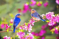 Birds in Springtime