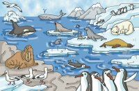 Talk plate  Animals at the North Pole