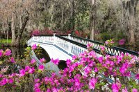 White Bridge and Pink Flowers in Forest