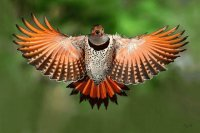 animaux: rapace