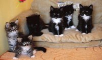 animaux: chatons