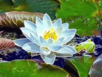 Fractal Water lily