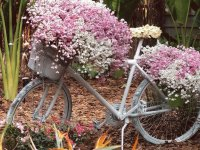 Pink and White Garden Bicycle