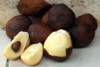 Salak fruit from Indonesia