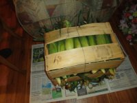 Crated corn