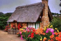 Colored Cottage