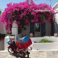 Bougainvillaea  Greece