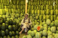 The Melon seller of Kabul  Afghanistan