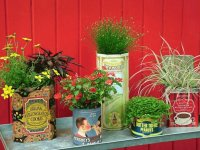 Vintage tins for House plants