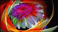 Colorful-Abstract-Flower