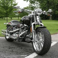 Harley Davidson - Springer Beauty