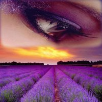 Lavender and Eye