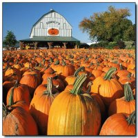 Pumpkins at Downey 's farm market  Ontario