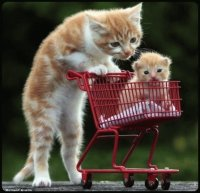 cat with kitten in trolley