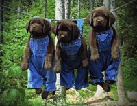 puppies out to dry