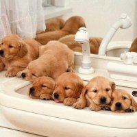 loads of puppies