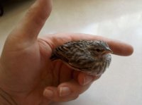 rescued songbird
