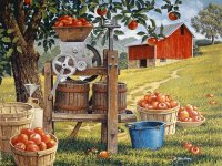 Cider time by Sandra McArdle