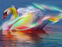 Colorful Swan