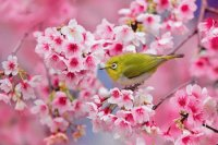 FLORES Y AVES