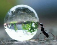 ant   water drop
