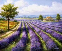 Lavender Fields by Sung Kim
