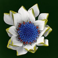 African Daisy Blue Eye