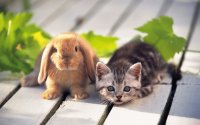 rabbit_and_cat