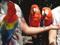 Parrots at the Zoo