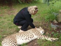 Cheetah patting in Canberra