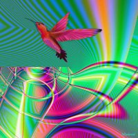 Colorful Hummingbird Flight