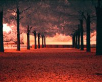 Line-of-Trees-in-red-a19561077