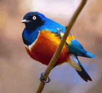 beautiful bird 2