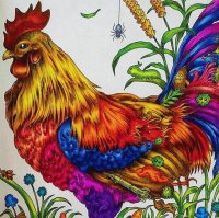 Amazing Rooster