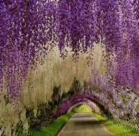 tunnel of beauty