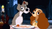 Lady   The Tramp
