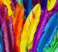Amazing Colorful Feathers